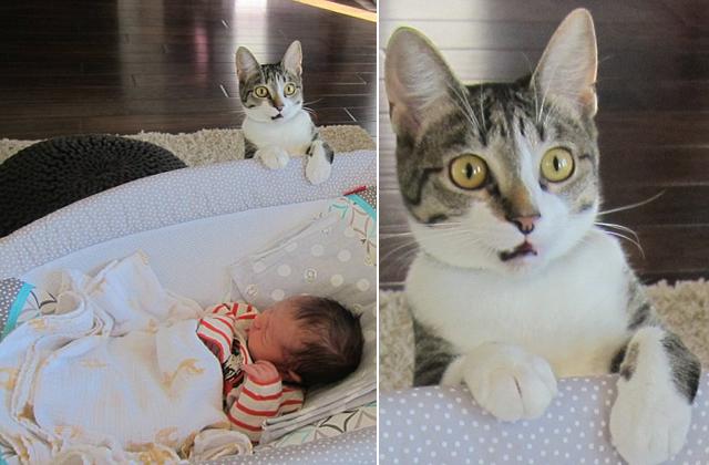 Cuki fotó: meglepődött a macska, mikor meglátta gazdái kisbabáját