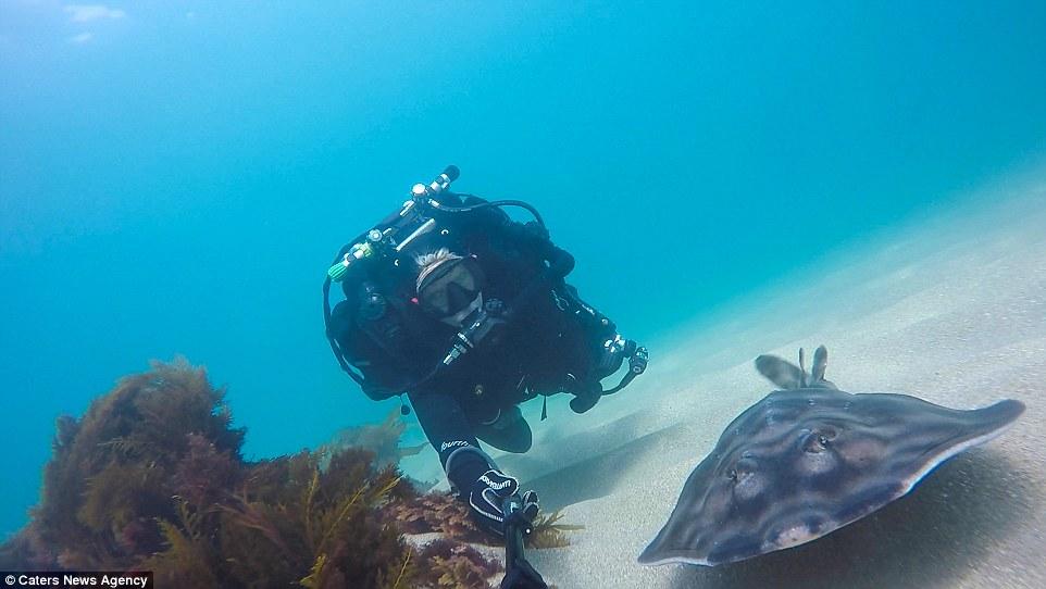 Egzotikus szelfiőrület: fotózkodj cápával! - képek