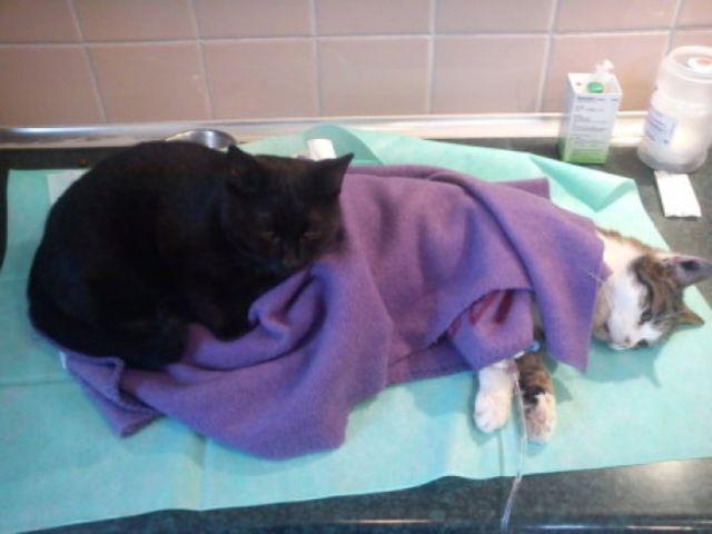 Más állatokat gyógyít a macska az állatmenhelyen - megható fotók