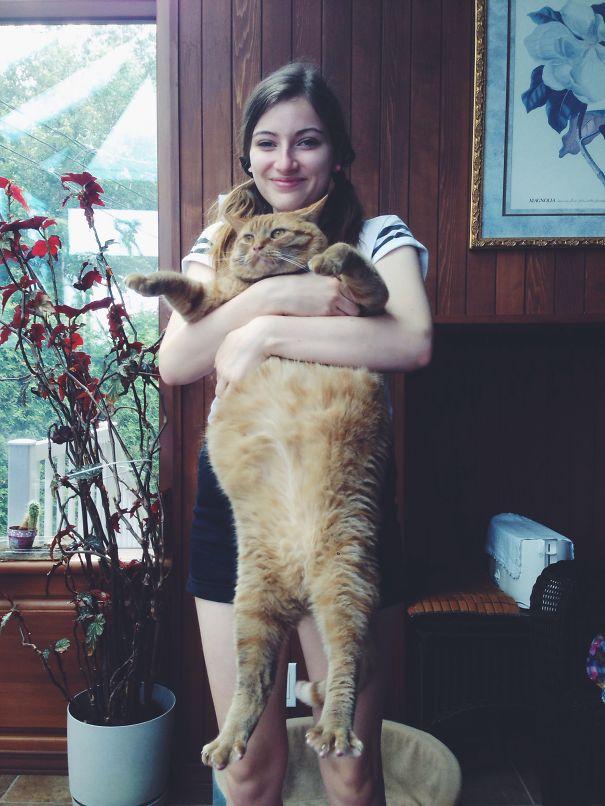20 óriási macska, aki házőrzőnek is beválna - fotók