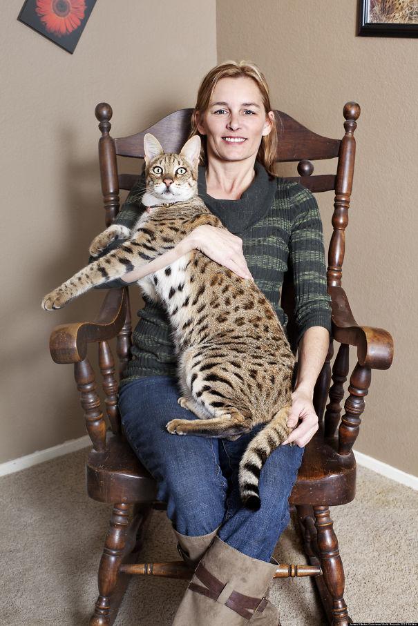 20 óriási macska, akitől a betörő is frászt kap - fotók