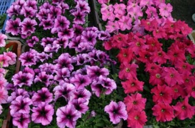 Fotó: Virágvásár - Csemő