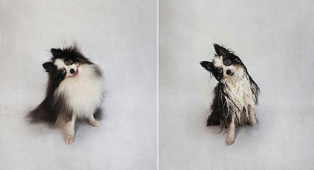Vicces fotók: ennyire cukik az ázott kutyák