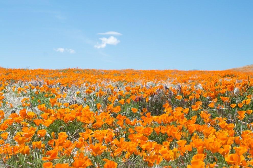 13 gyönyörű virágba borult mező - fantasztikus képek