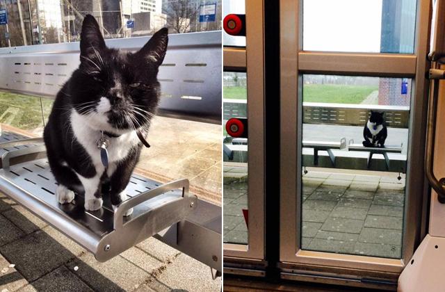 Tíz éve várja a villamost a macska - fotók