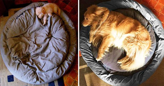 Bájos fotók: kutyák kölyökként és felnőttként - nlc