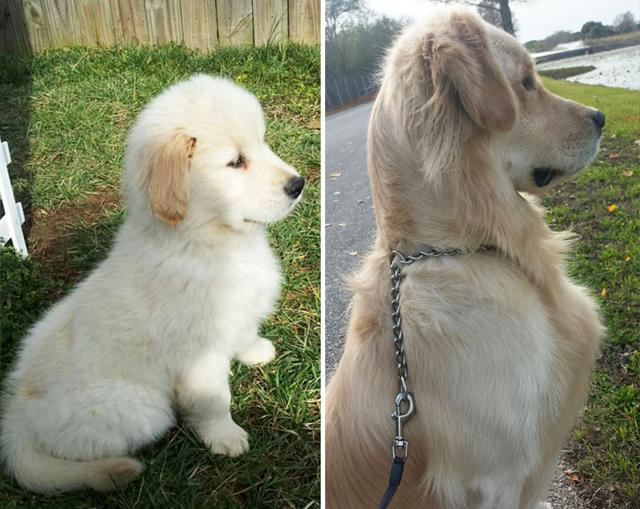 Bájos fotók: kutyák kölyökként és felnőttként