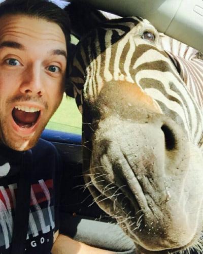 Benézett a zebra az ablakon, tökéletes selfie lett belőle