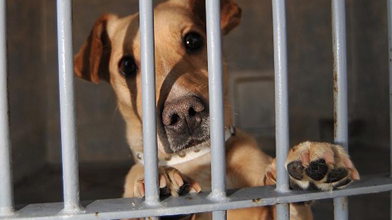 Milli kutya két élete