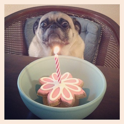 17 kutya, aki utálja a születésnapi zsűrt