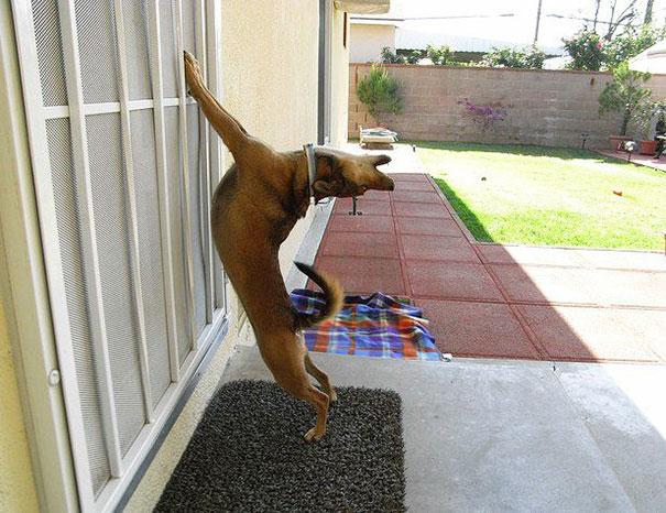 20 vicces kép a háziállatokról, akiket a gazdijuk kicsuktak