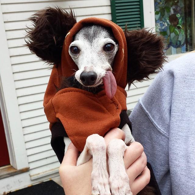 Kilógó nyelvű kutyát imád mindenki az interneten - vicces képek