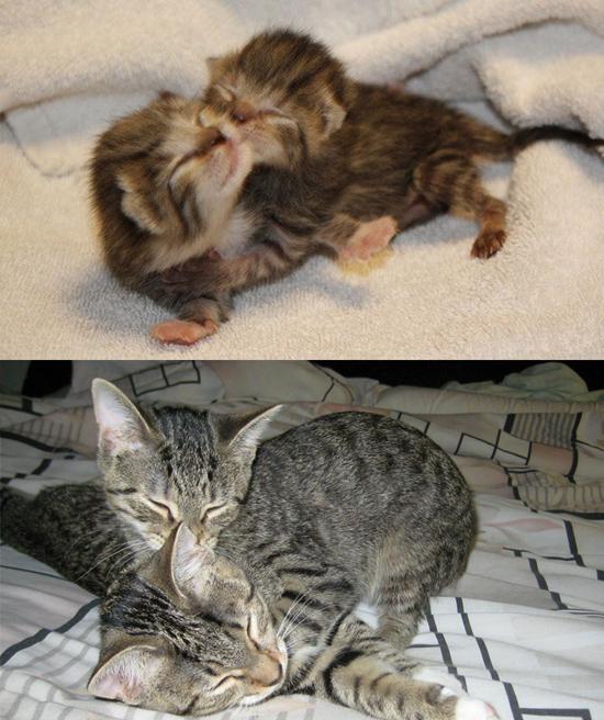 Cuki fotók: ezeknek a macskáknak csak a mérete változott