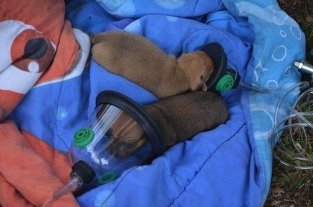 Kölyökkutyákat mentettek meg a hős tűzoltók