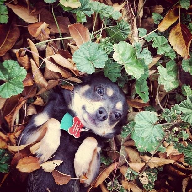 Ismerd meg a világ legtündéribb kutyusát!