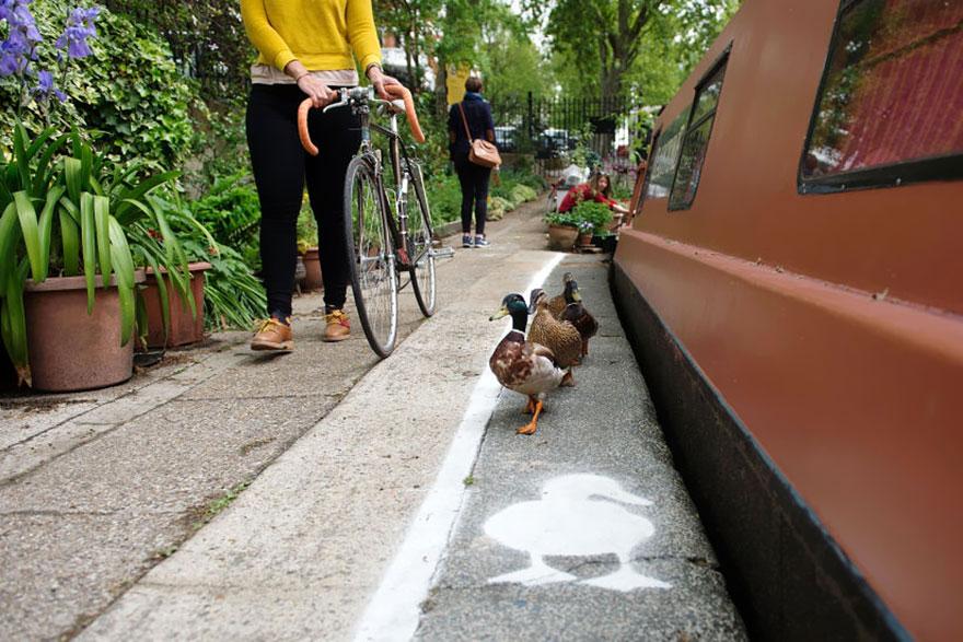 Saját sétányt kaptak a kacsák Londonban