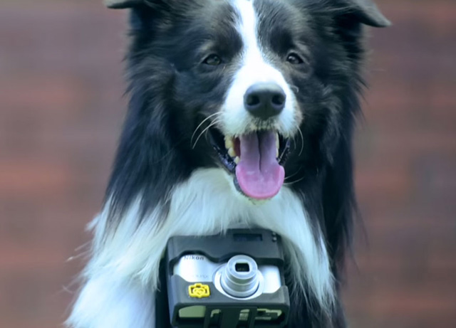 Ő a világ első fotós kutyája - galéria