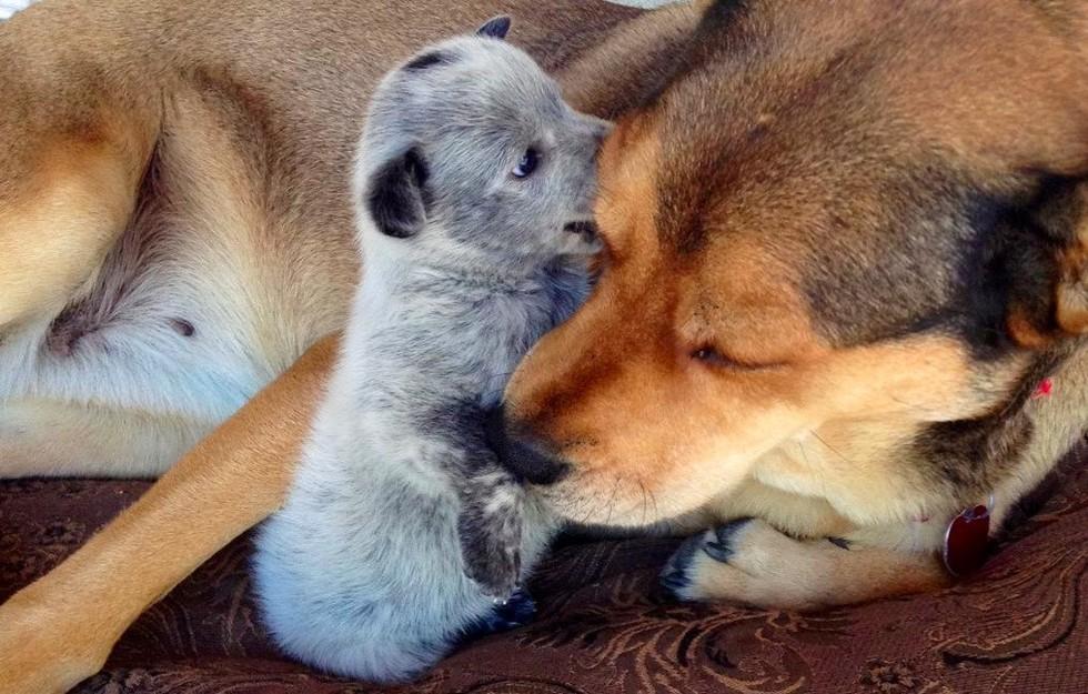 19 kutyamama, akik imádják kölykeiket - cuki fotókkal