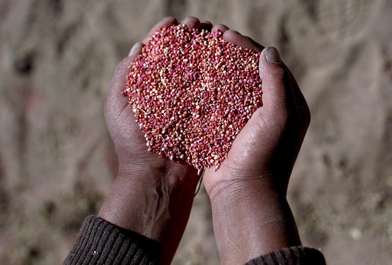 Quinoa - a tápanyagbajnok gabona
