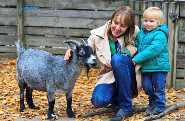 Gyógyítás állatterápiákkal – beteg gyerekeken segítenek az állatok