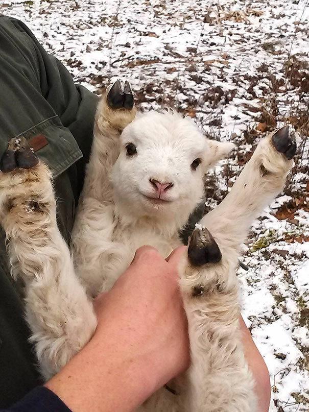 Ennyire imádják az állatok a pocakvakargatást - képek