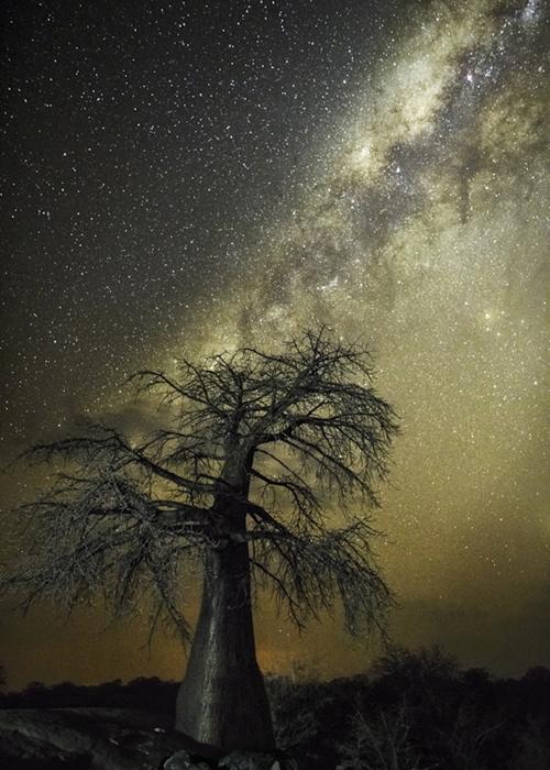 Varázslatos fotók: ilyenek a világ legöregebb fái éjszaka