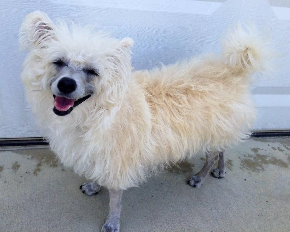12 kutya, akik egyáltalán nem hasonlítanak a kutyákra - vicces képek