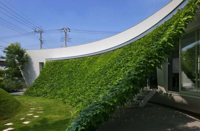 a természetes, növényből kreált árnyékoló könnyedén megvalósítható, hosszútávú megoldás Fotó: pinterest.com