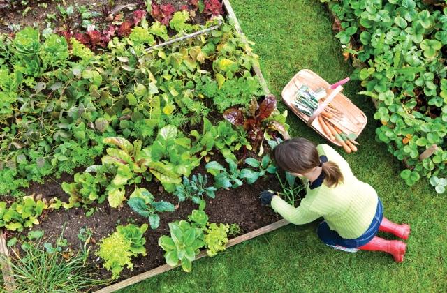 Így neveld a növényedet: munkanaptár júniustól szeptemberig