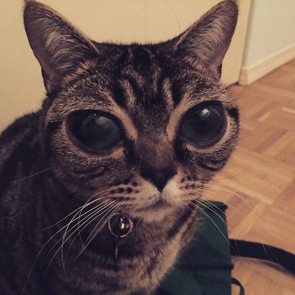 Az ufószemű macska sokkolja a világot - képek+videó