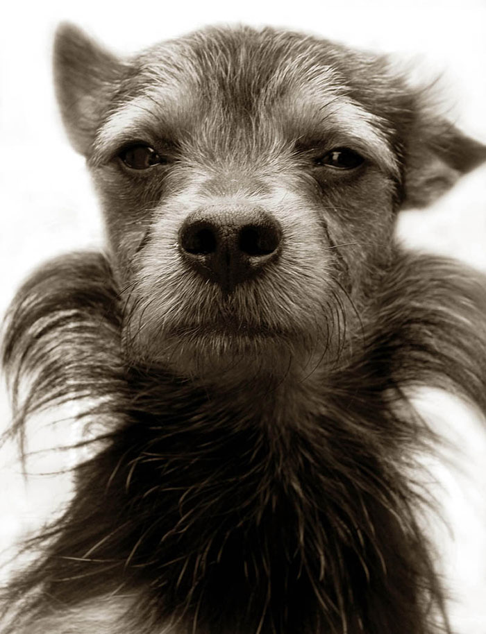 Megható fotók: ilyen az otthontalan kutyák élete