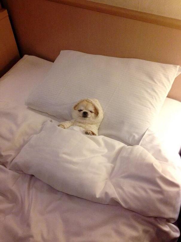 Cuki fotók: 20 kutya, akik úgy alszanak, ahogy senki más