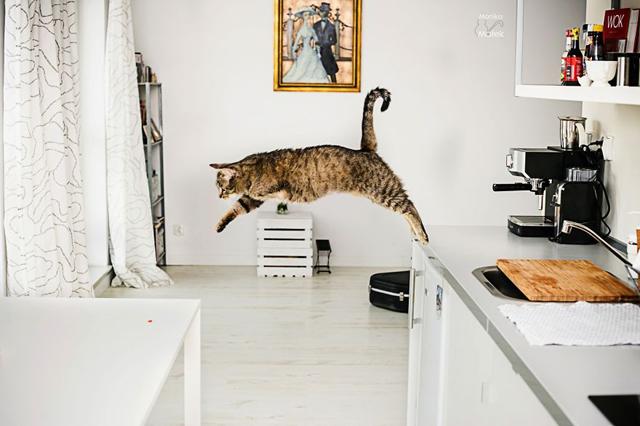 Fogyatékkal élő macskákról készített csodaszép fotókat - galéria