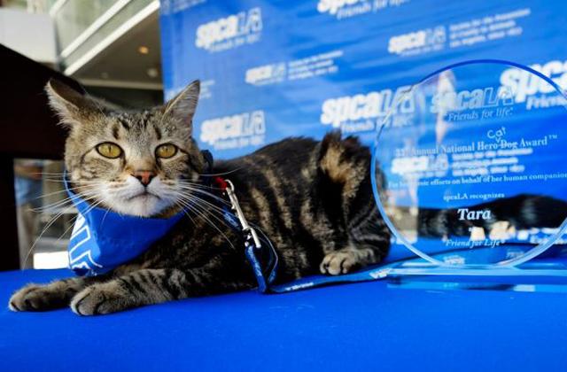 Hős kutya kitüntetést kapott egy macska