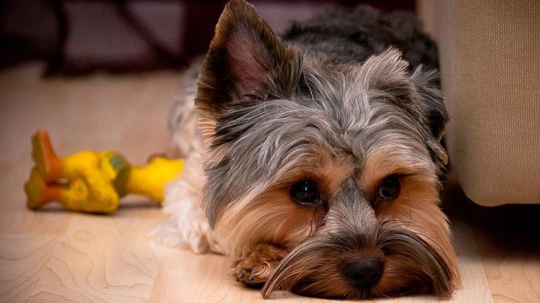 Hogyan kell gondozni a kutyát hőségben?