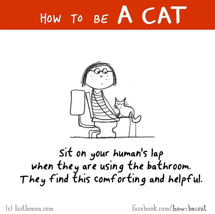 Ha macskával élsz, ezek várnak rád - vicces képek