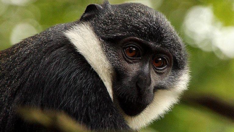 Tukánbűnözés: megszökött a francia majmok elől