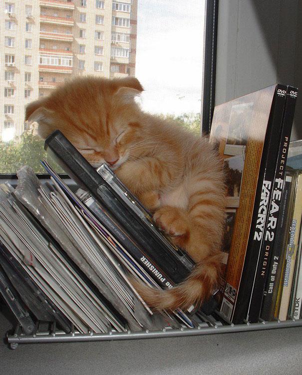 20 alvó macskás kép, aminél nehezebb lesz ma cukibbat találni - képek