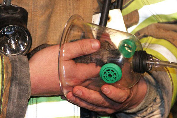 Így menik az állatok életét a tűzoltók - képek