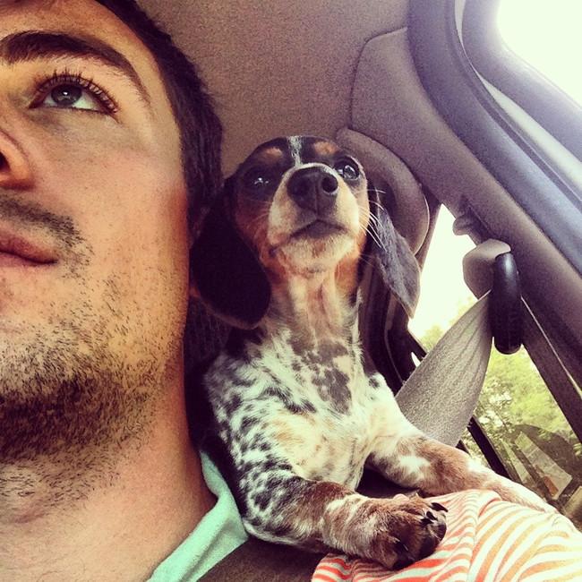 Kutyák és macskák furcsa helyeken - vicces fotók