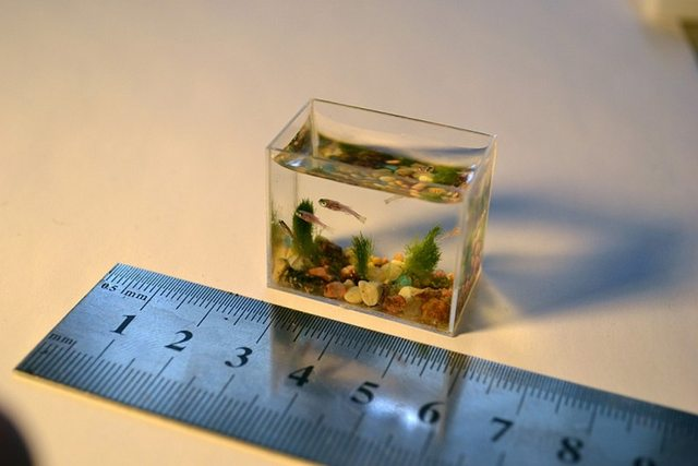 27 hihetetlen akvárium, amit neked is látnod kell! - képek