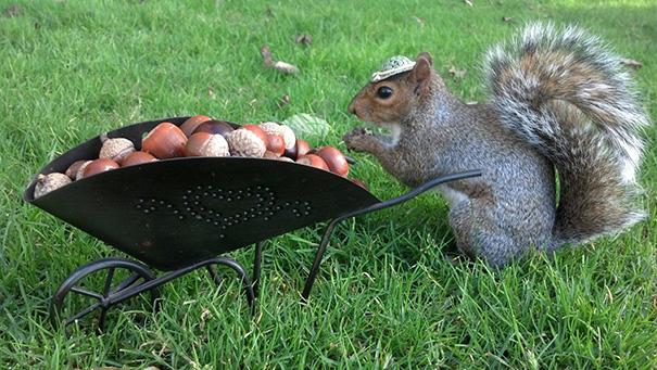 A nap legcukibb fotósorozata: mókus tündéri ruhákban