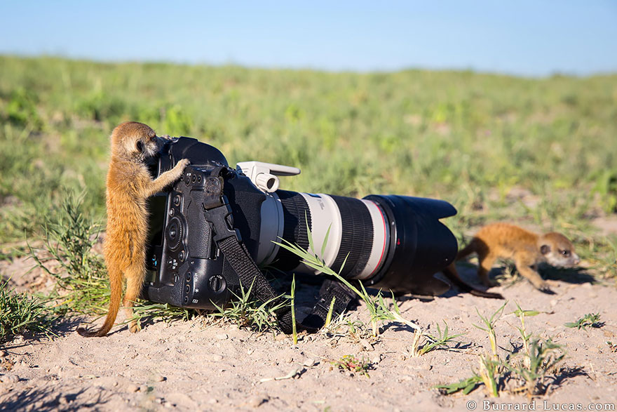 21 állat, akik fotósok szeretnének lenni - tündéri képek