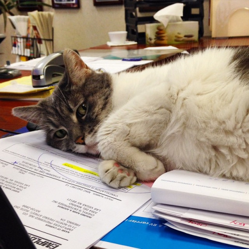 18 ok, hogy miért kell minden irodába egy macska