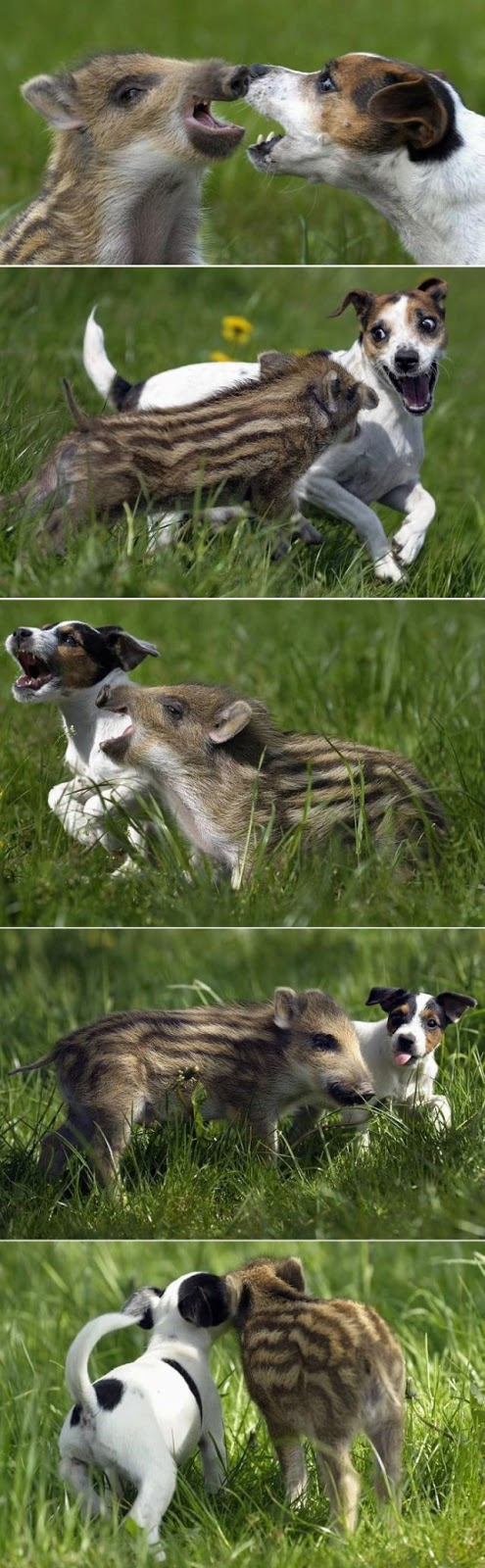 Egymást szeretgető állatok - végtelenül cuki fotók