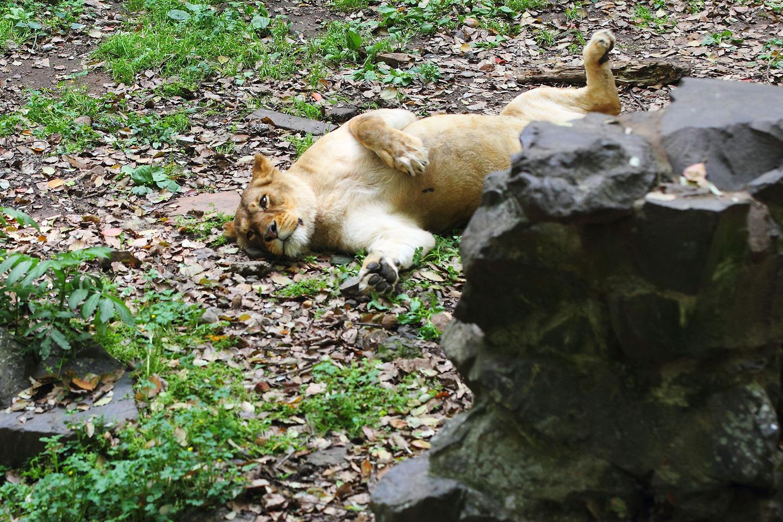8 tüneményes állat, akik tudják, hogyan kell lustálkodni – fotók