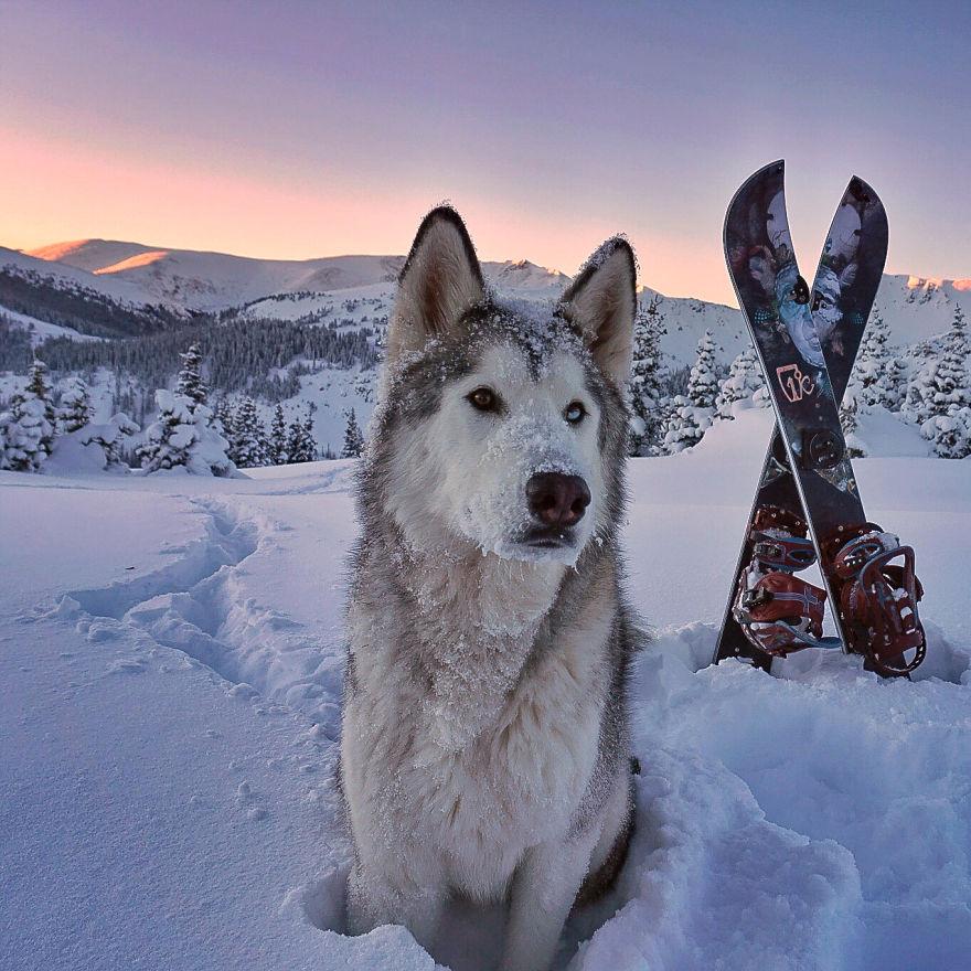 Kutya és ember mesebeli közös kalandjai - fotók