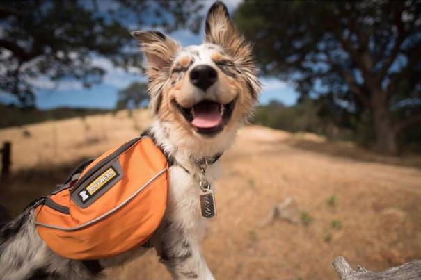 Ennyire jó a kempingezés kutyákkal - cuki fotók