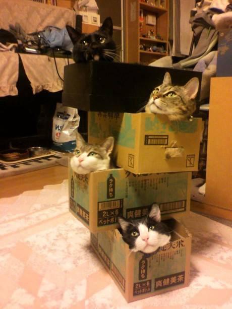 28 macska, akik annyira lusták, hogy az már fáj - vicces képek