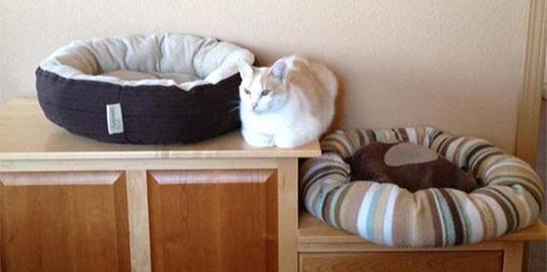 15 bizonyíték arra, hogy a macskák nem éppen észlények, de mi (ezért is) imádjuk őket